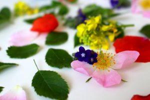 flowers-3397279__340