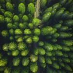 pexels-lukas-rodriguez-3573351