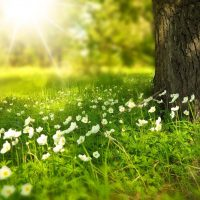 herbe fleur